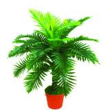 Classic Jungle Fern Plant
